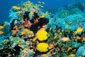 египет море
